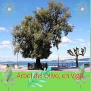 El Olivo, símbolo de Vigo.